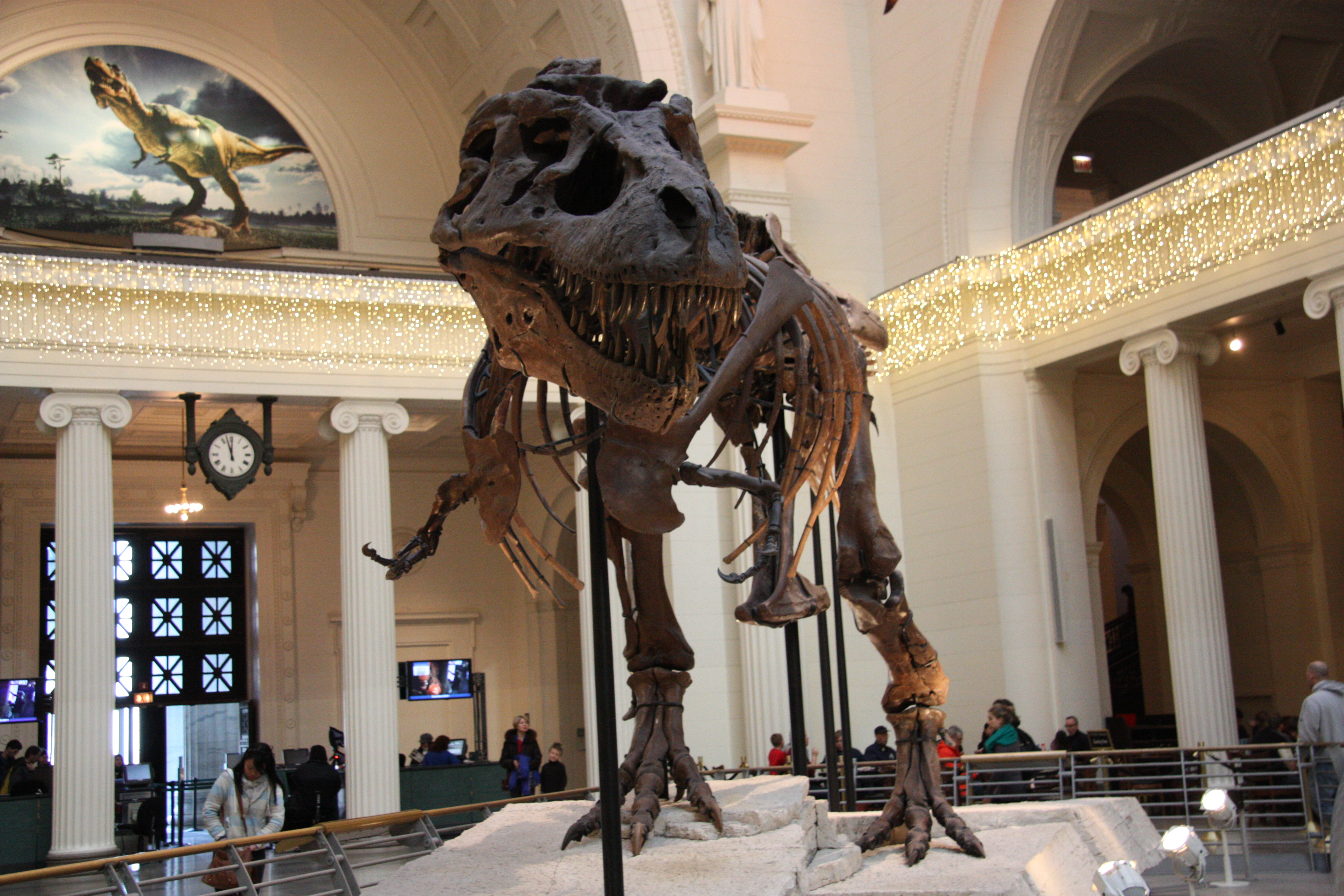 Sue the Tyrannosaurus rex at the Field Museum