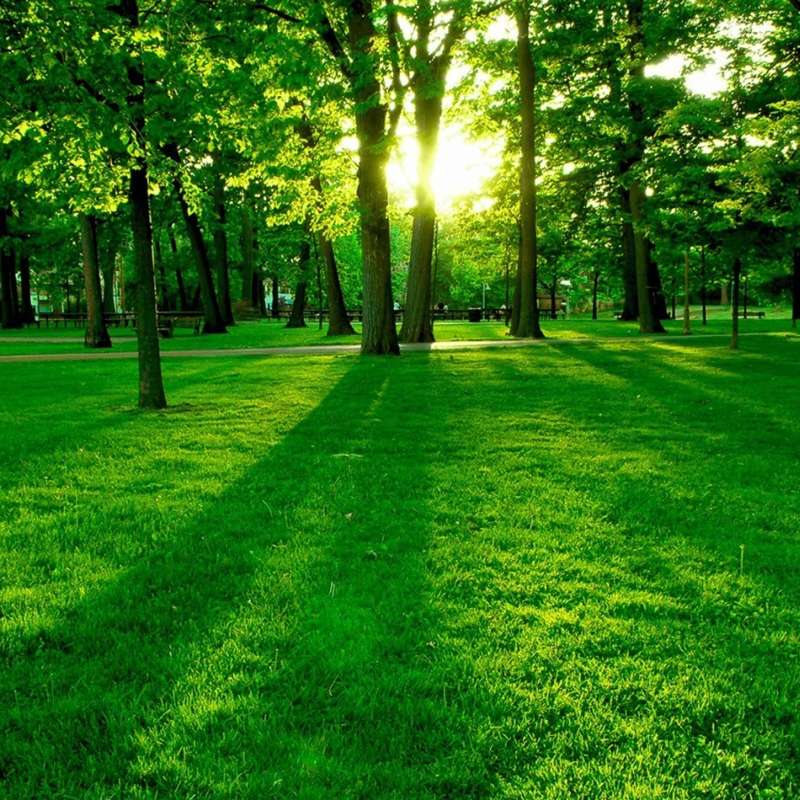 Image of a green forest park.