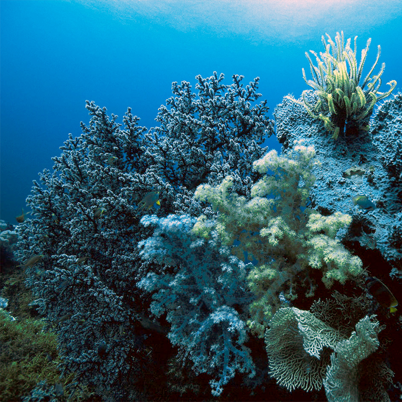 Image of a coral reef.