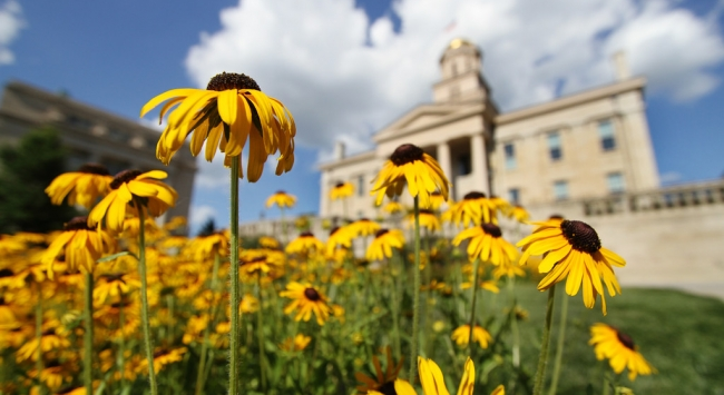 Old Capitol with black-eyed susans