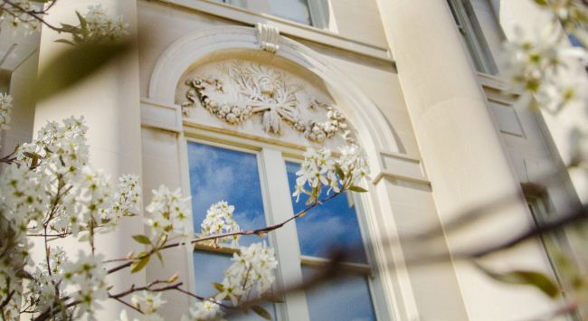 blossoms and building detail