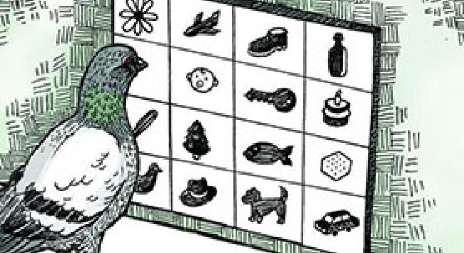 illustration of pigeon pecking at images on a screen
